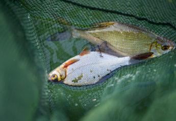 Ferienhaus-Park Brennickenswerder bei Lychen. Angler am Lychensee.